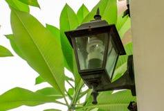 照明的圆的电灯泡在晚上 库存照片