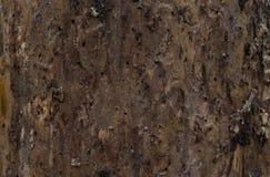 照明设备树足迹 树皮在春天森林 库存照片