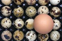 照片从上面小未煮过的鹌鹑蛋和鸡鸡蛋鹌鹑蛋一张顶上的照片,复活节土气背景 我喜欢 库存图片