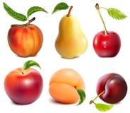 传染媒介果子的汇集。 免版税图库摄影