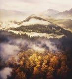 照片拼贴画:原野风景 金叶茂盛树、青山与针叶树和大山 免版税图库摄影
