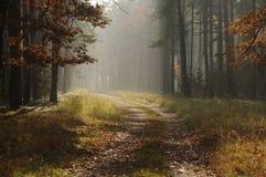 森林在秋天。 图库摄影