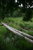 照片是老和危险横穿通过欧洲北部的一条小沼泽的森林河  库存照片