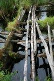 照片是老和危险横穿通过欧洲北部的一条小沼泽的森林河  免版税库存图片