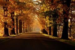 秋天。 库存照片