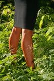 照片晒黑了黑裙子的腿女孩半隐蔽在绿色植被 免版税库存照片