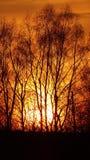 照片本质上,树,绯红色日落,平衡照片 免版税库存照片