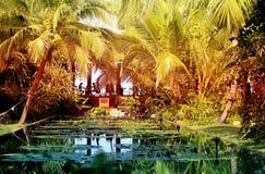 照片热带天堂庭院 库存图片
