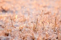照片由霜种植冻 免版税库存图片