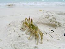 照片的小热带寄居蟹关闭 免版税库存图片