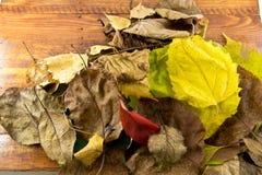 照片秋叶在木背景说谎 免版税图库摄影