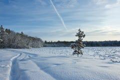 照片结构树 库存照片