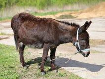 照片滑稽的驴 免版税库存照片