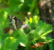 照片蝴蝶在森林里 库存图片