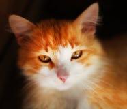 照片画象小猫 库存照片