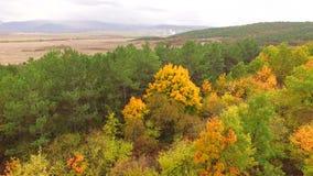 照相机上升并且显示在秋天黄色森林之间的界限 股票录像