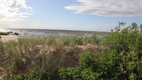照相机从灌木上升并且离开海 影视素材