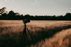 照相机剪影在三脚架的在夺取在晚上日落光期间的麦田 库存图片