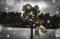 照相机和冬天风景 免版税库存图片