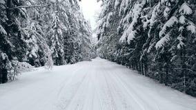 照相机在一条冬天森林公路飞行在寒冷冬天乘汽车 从敞篷的看法 影视素材