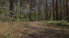 摄象头在地上移动,在躺着的树上飞 躺在相机的路上 在 影视素材