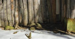 照相机在春天移动到在右边的左边从底部去除木篱芭 股票视频