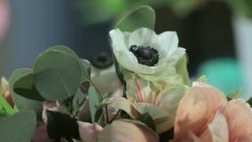 照相机射击玫瑰的花,在行动的花束 股票录像