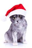 照相机查找圣诞老人的猫帽子对佩带 库存图片