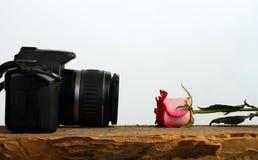 照相机每句谎言其他照片上升了 库存图片