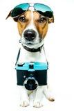 照相机狗照片树荫 免版税库存图片