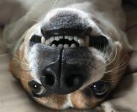 照相机的微笑 免版税库存照片
