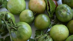 照相机移动新鲜的绿色庭院蕃茄 影视素材