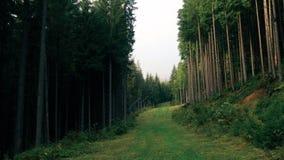 照相机移动深入与高大的树木的森林风景在山 股票视频