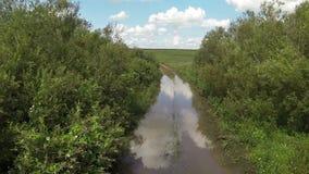 照相机通过在一个大水坑的灌木飞行 影视素材