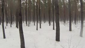 照相机通过有雾的冬天森林飞行 股票录像