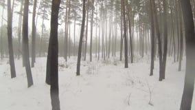 照相机通过有雾的冬天森林飞行 影视素材