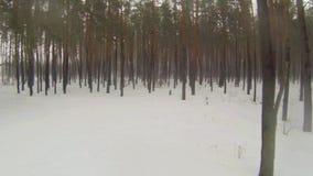 照相机通过有雾的冬天森林飞行 股票视频