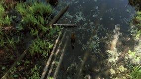 照相机降低在往一个干净的湖的沼泽地 4K 影视素材
