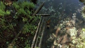照相机降低在往一个干净的湖的沼泽地 4K 股票录像