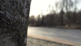 照相机从左到右移动并且首先去除树然后跑的运动员 影视素材