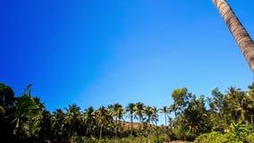 照相机从棕榈上面移动向绿草在神仙的小河公园 股票视频