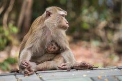 照顾与她逗人喜爱的婴孩的猴子本质上泰国的 免版税库存图片