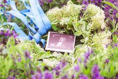 照顾卡片以安慰者和超声波图象怀孕 免版税库存图片