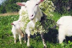 照顾和她的孩子,佩带一个大花圈 库存照片