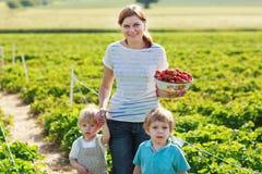 照顾和有机草莓农场的两个小兄弟姐妹男孩 免版税图库摄影