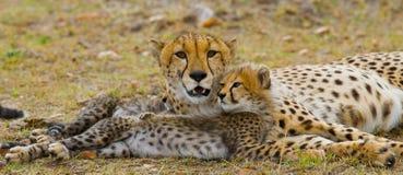 照顾猎豹和她的崽在大草原 肯尼亚 坦桑尼亚 闹事 国家公园 serengeti 马赛马拉 图库摄影