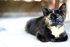 照顾猫 免版税图库摄影
