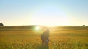 照顾走在麦田,跑和拥抱她,愉快的家庭,日落美丽的景色的女儿在背景中 股票录像