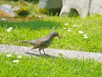 照顾食物的鸟狩猎新部分的 库存照片