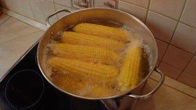 煮沸在罐Timelapse的玉米棒子 股票视频